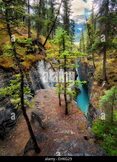 Canyon in Beauty Creek. Jasper National Park, Alberta, Canada - Stock Image