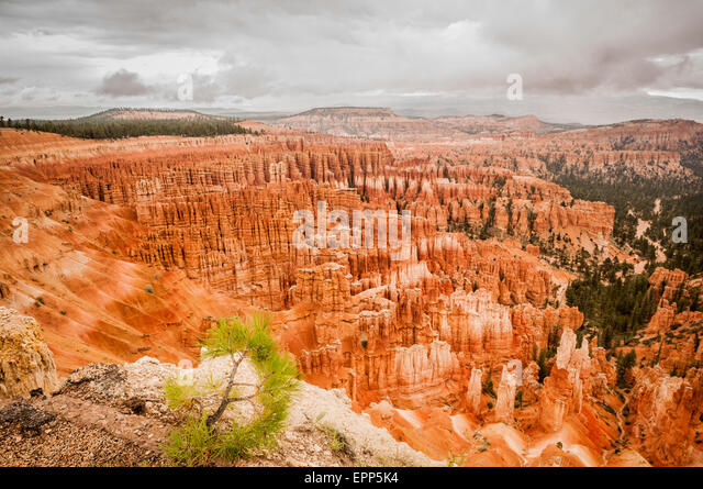 Bryce Canyon red amphitheater west USA utah 2013 - Stock Image