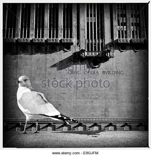 Bird outside building - Stock-Bilder