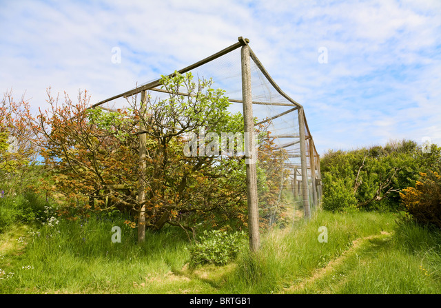 Heligoland Trap used for the trapping of birds to monitor migration - Stock Image