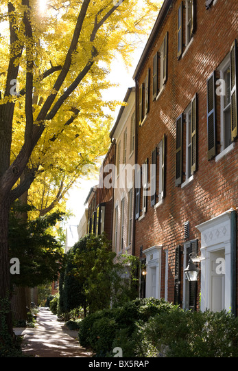 Ginkgo trees line street in autumn, Georgetown, Washington, DC - Stock Image