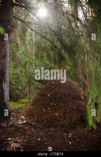 Pile of dead leaves in forest - Stock Image