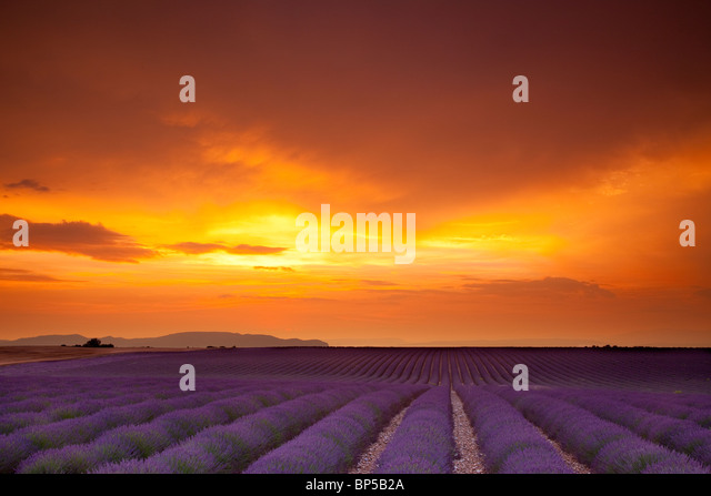 Colors of Sunset along the Valensole Plateau, Provence France - Stock-Bilder
