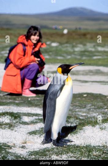 Falkland Islands WomanTourist beside King Penguin - Stock Image