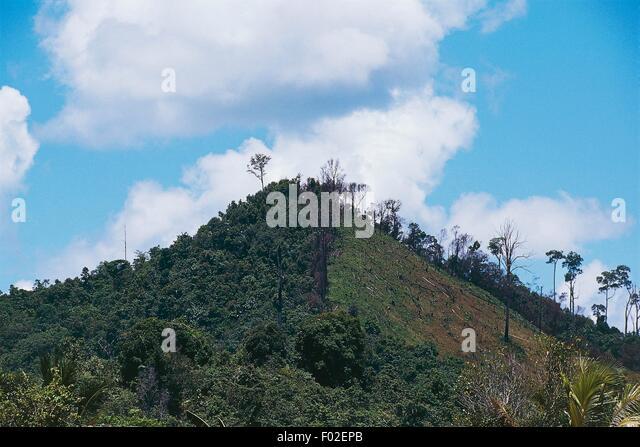 Deforestation on the banks of the Mahakam river, East Kalimantan, Borneo, Indonesia. - Stock Image