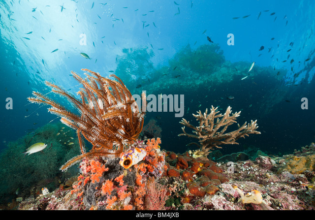 Shallow Coral Reef, Raja Ampat, West Papua, Indonesia - Stock Image