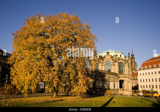 DEU Dresden Saxony Wallpavillon Zwinger autumn tree - Stock Image