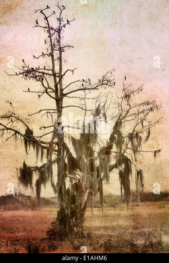 Watercolor Florida Landscape With Old Oak Tree - Stock Image