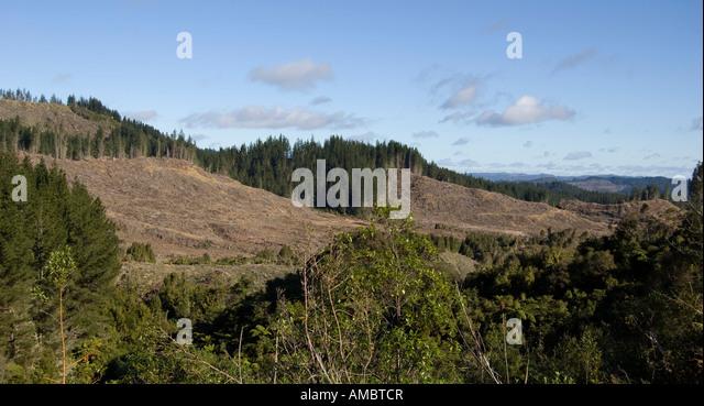 Deforestation Ohakune New Zealand - Stock Image