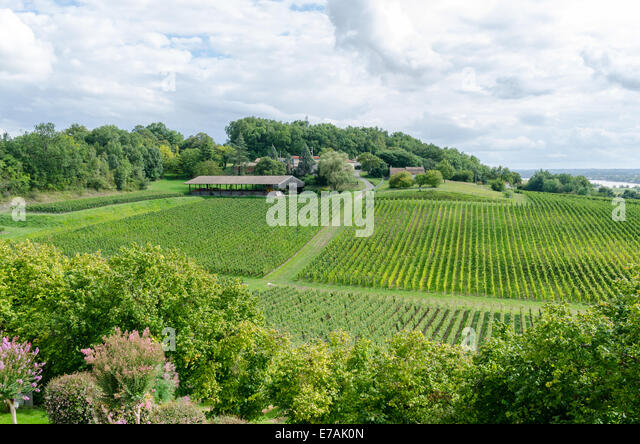 Vineyards of Chateau de la Riviere in the Fronsac region of Bordeaux, France - Stock Image