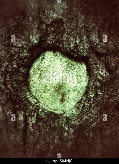 Tree trunk - Stock Image