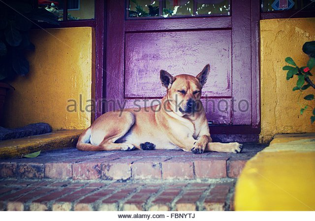 Dog Waiting At Front Door - Stock Image