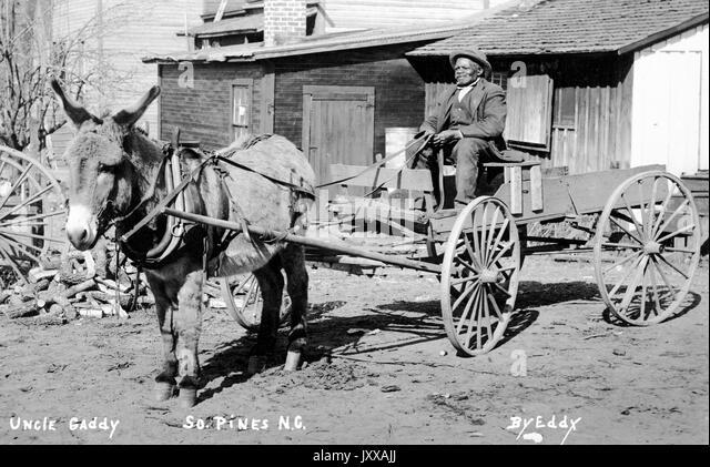Full length sitting portrait of elderly African American man sitting in wagon carried by mule, wearing dark vest, - Stock Image