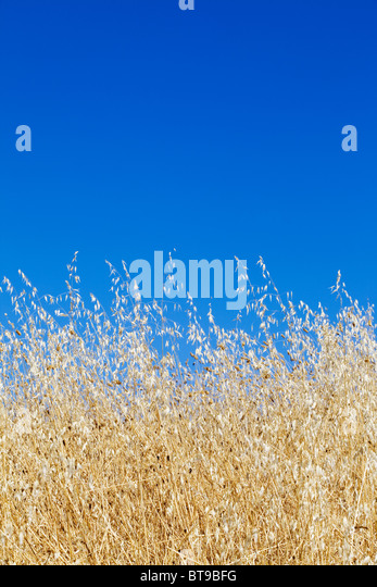 Summer day - Stock Image