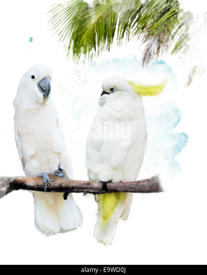 Digital Painting Of White Parrots - Stock Image