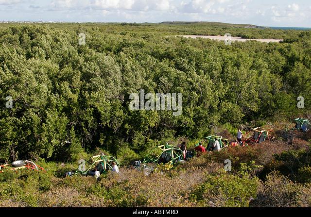 Grand Turk Hawknest Plantation Gun Hill dune buggy tour vehicle trees - Stock Image