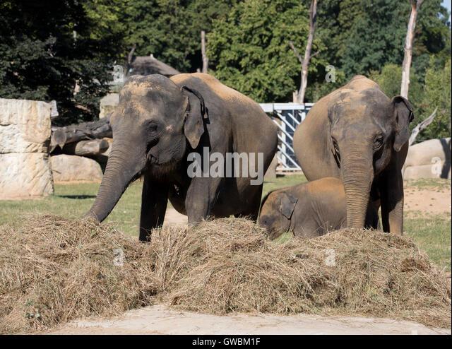 Elephant stampede stock photos elephant stampede stock for Designhotel elephant prague 1 czech republic