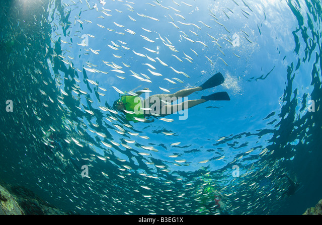 Snorkeler and fish - Stock Image