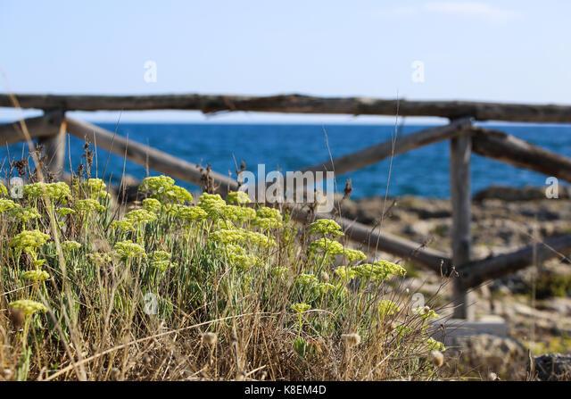 maritime landscape - Stock Image