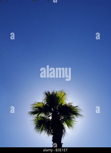 The top of a palm tree in clear blue sky - Stock Image