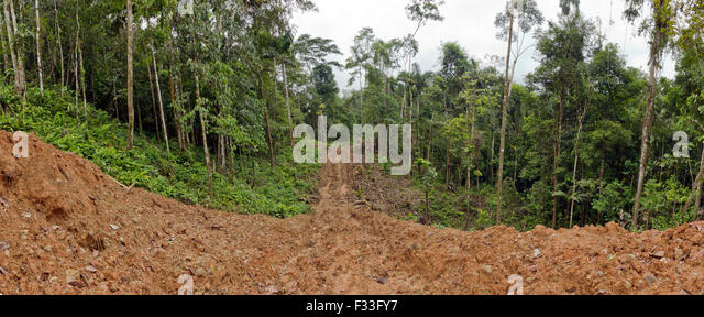 New road bulldozed through rainforest in Ecuador. Road building brings colonization and deforestation to the Amazon - Stock Image