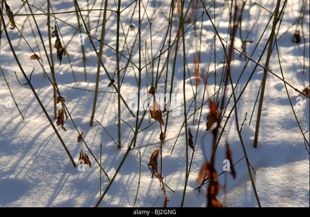 WINTER SNOW BACKGROUND - Stock Image