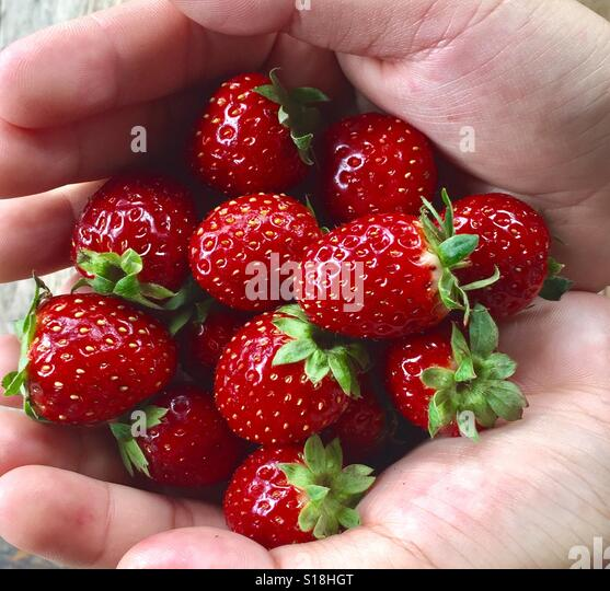 A handful of red strawberries, Chiang Mai, Thailand - Stock Image