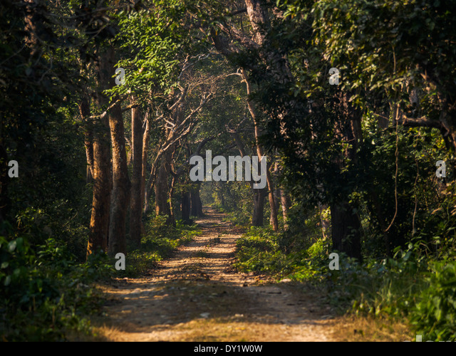 Terai Jungle Stock Photos & Terai Jungle Stock Images - Alamy
