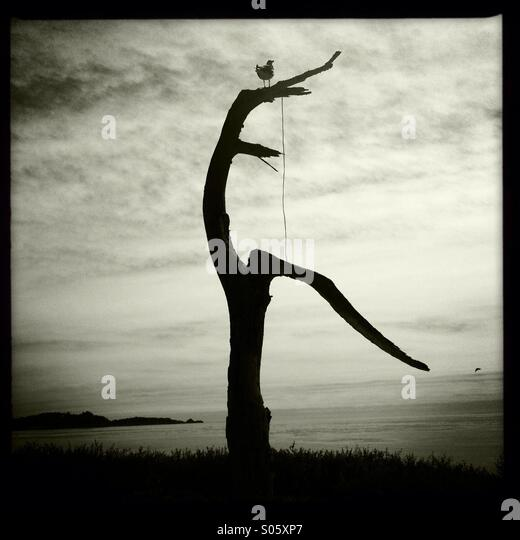 Seagull Perching on Dead Tree 2 - Stock Image