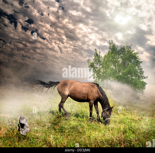 Horse in a meadow on a cloudy day - Stock Image
