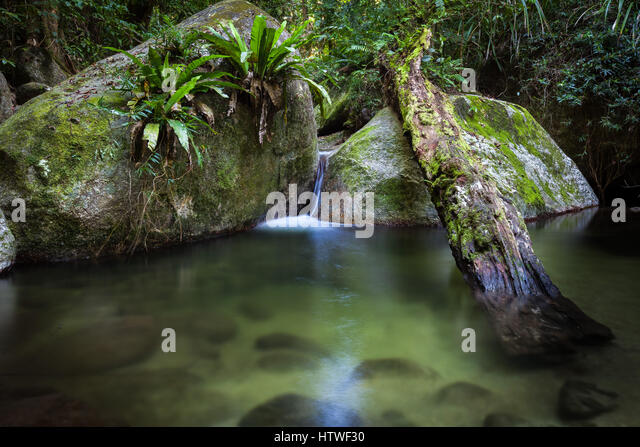 Mossman Gorge - Far North Queensland, Australia - Stock-Bilder