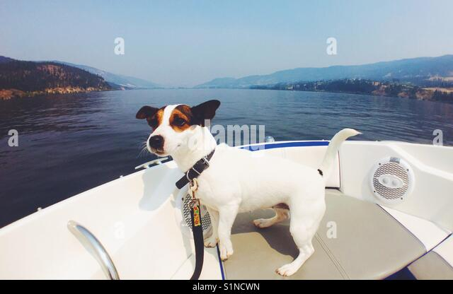 Dog on a boat. - Stock Image