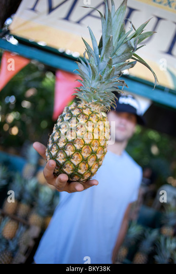 Man stands in front of the fruit truck by the road in Maui, Hawaii and shows a fresh pineapple. - Stock Image