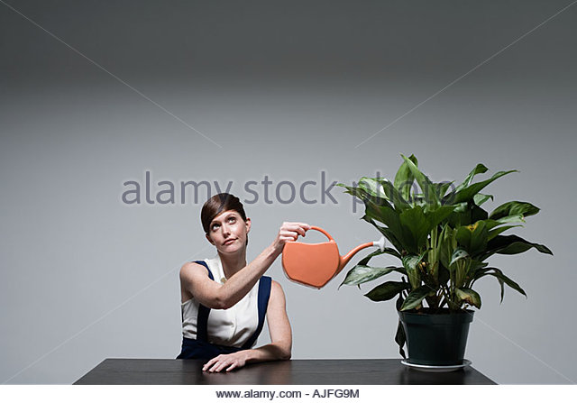 A businesswoman watering a plant - Stock Image