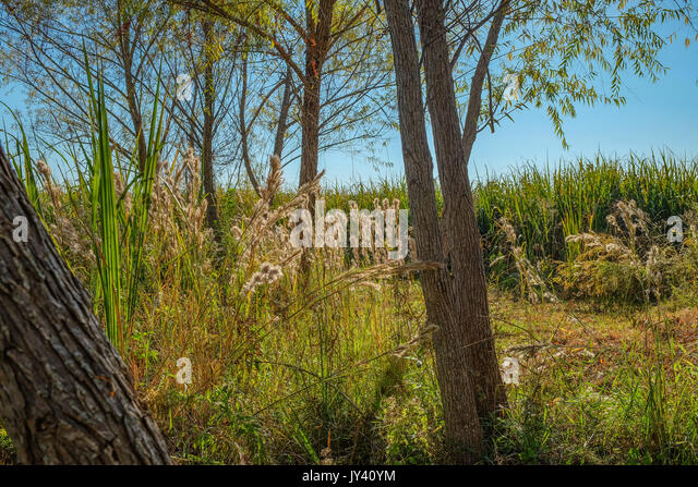 Thick woods and vegetation, just turning color for autumn, along the bank of the lake in Blount Cultural Park, Montgomery - Stock Image