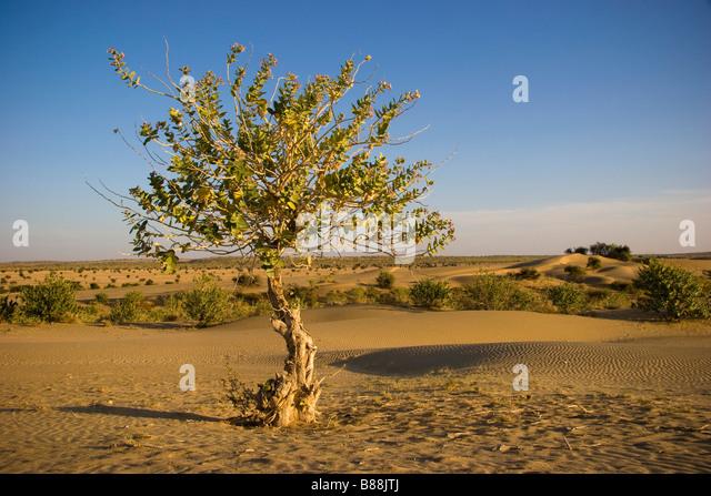 Khuri desert Rajasthan India - Stock-Bilder