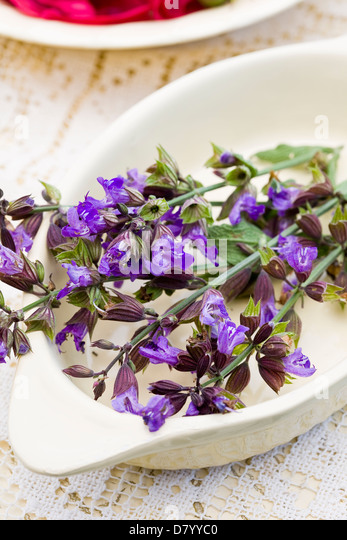 A white dish with purple edible sage flowers in it. - Stock Image