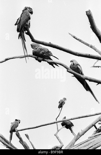 Parrots sitting on branches in the Legend Park - Stock Image