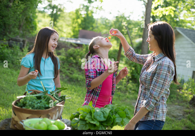 Organic farm. Summer party. A woman feeding a young girl fresh picked cherries. - Stock Image