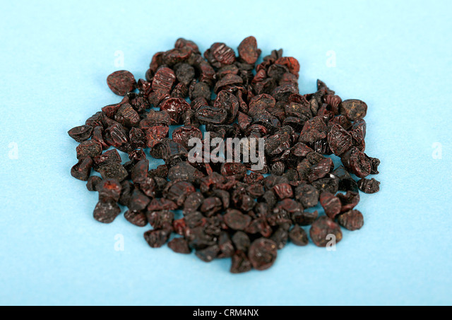 Cochineal Black produces carmine, a bright red dye used in microbiology and also by the pharmaceutical industry - Stock Image