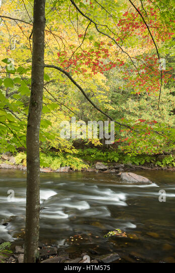 Autumn colours along the Oxtongue River at Ragged Falls Provincial Park, Ontario, Canada - Stock-Bilder