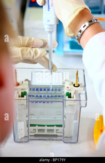 Biotechnology laboratory, chemicals and test tubes for DNA analyzing. Eppendorf tubes. - Stock Image