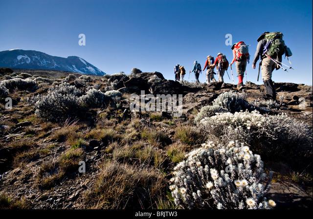 Hikers trek towards Mt. Kilimanjaro mid-morning as the peak lurks in the distance. - Stock Image