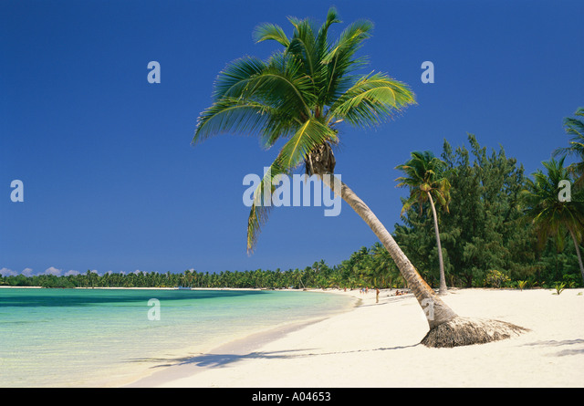 Dominican Republic Punta Cana White sandy beach and palm tree - Stock Image