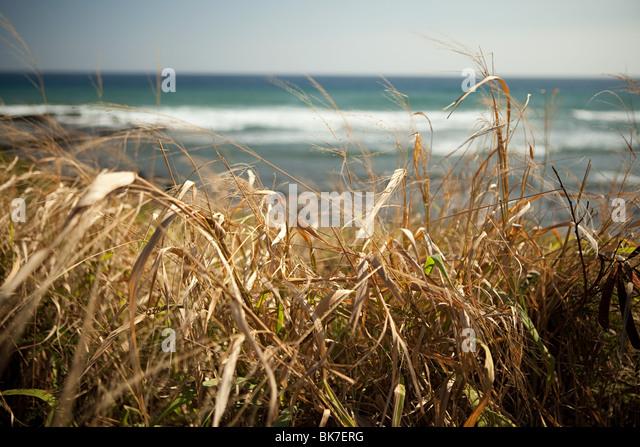 Marram grass and sea - Stock Image