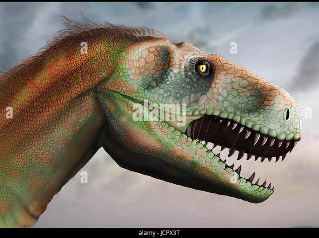 Head study megalosaurus.Megalosaurus is genus extinct meat-eating dinosaurs,theropods,from Middle Jurassic period - Stock-Bilder