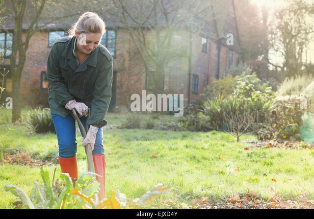 Woman Gardener Digging with Spade - Stock Image