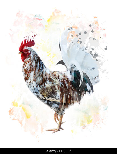 Digital Painting Of Colorful Rooster - Stock Image