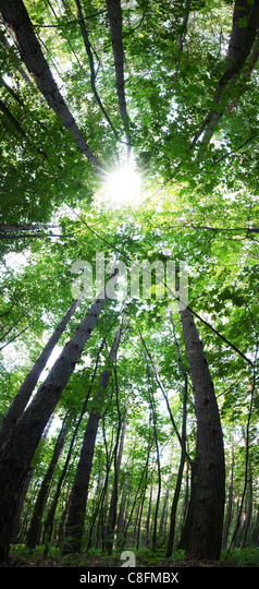 Vertical panorama of the forest at 180 degrees - Stock Image