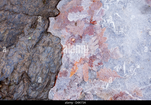 Leaves frozen in layer of ice - Stock Image